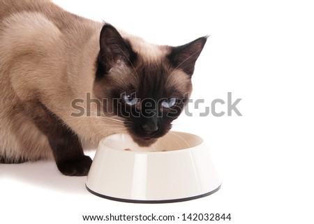 siamese cat with feeding bowl - stock photo