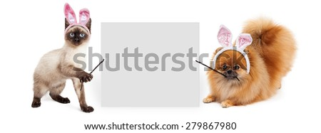 Siamese kitten and Pomeranian dog holding up a blank white sign while wearing Easter bunny ears - stock photo