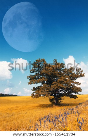 Siberia forest.Yamal - stock photo