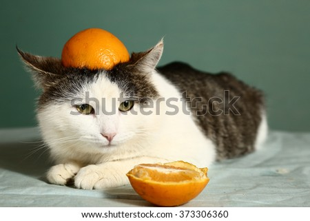 siberian cat in funny orange hat on the head close up portrait - stock photo