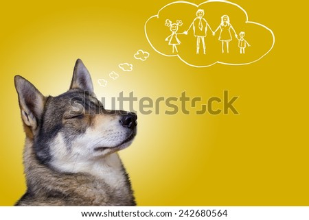 Siberian Husky dog dreaming about loving family isolated on yellow background - stock photo