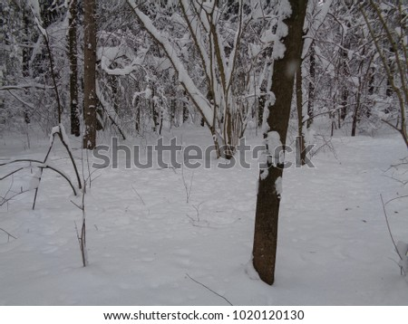 Siberian snow frozen forest. Minus 15 degrees Celsius