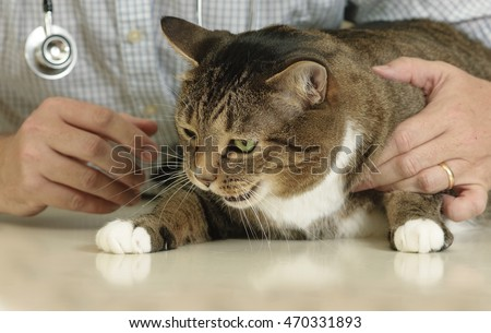 Sick and cranky older cat examined by kind veterinarian