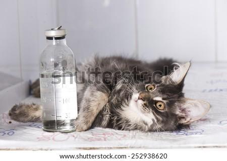 Sick cat in animal hospital - stock photo