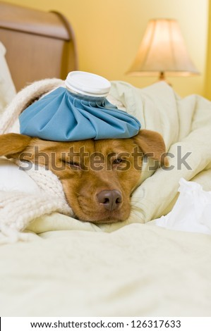 Sick dog in bed with water bottle and tissue.