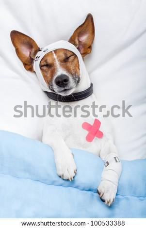 Sick dog with bandages lying on bed and sleeping - stock photo