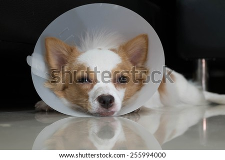 Sick dog with collar