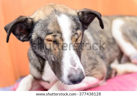 sick homeless dog with eye disease in a veterinary clinic - stock photo