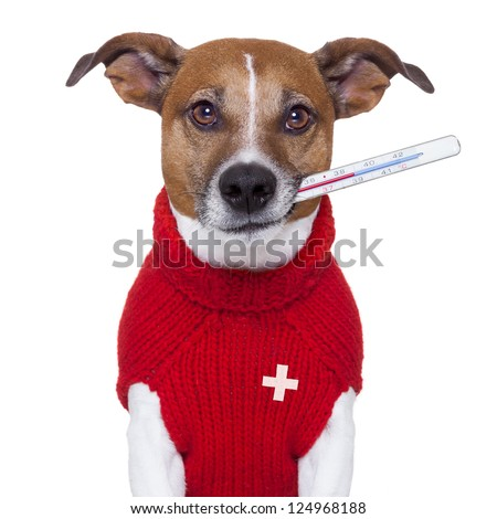 sick ill cold dog  with fever - stock photo