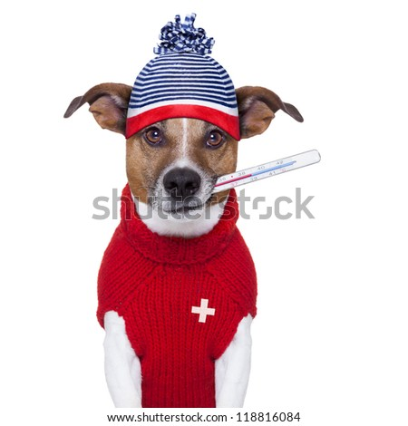 sick ill cold dog  with fever and hat - stock photo