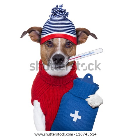 sick ill cold dog  with fever and hot water bottle - stock photo