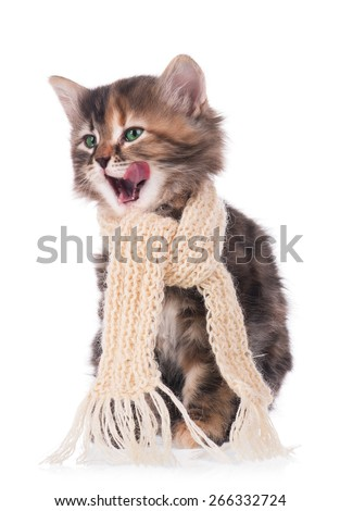 Sick siberian kitten with a scarf tied round a neck isolated on white background - stock photo