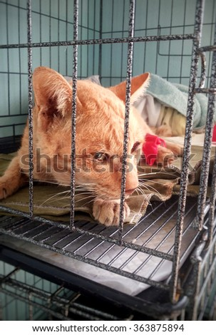 sickness cat laying in the cage, veterinary clinic - stock photo