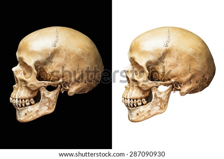 Side of human skull isolated on black and white background with clipping path - stock photo