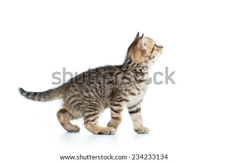 side of view of kitten cat isolated on white - stock photo