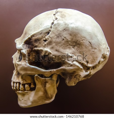 Side profile view of human skull on black - stock photo