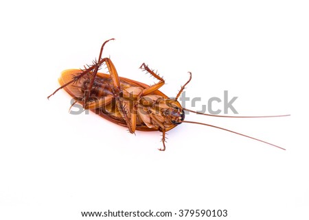side view a dead cockroach on white background