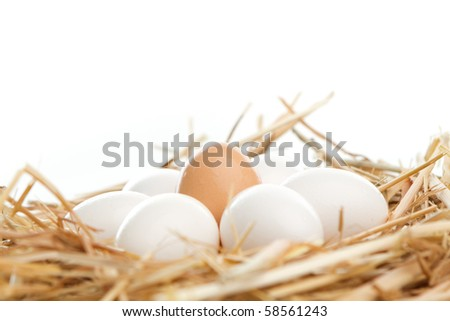 Side view: Bunch of white eggs surrounding a brown egg