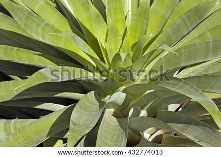 Side view close up of patterns and textures of succulent green plant leaves
