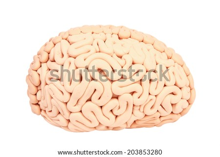 side view human brain handmade plasticine isolate on white background with clipping path - stock photo