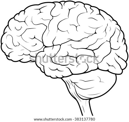 Side View line drawing of a human brain - stock photo