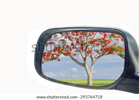 side view mirror isolated on white background with reflect of tree photo - stock photo