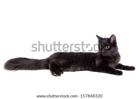Side view of a Black Cat, isolated on white - stock photo