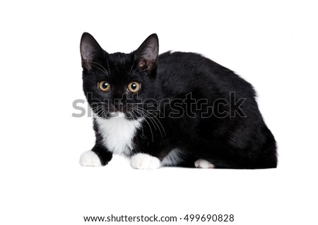 Side view of a black kitten lying on white background