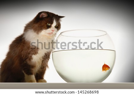 Side view of a cat looking at goldfish in a fishbowl against white background - stock photo