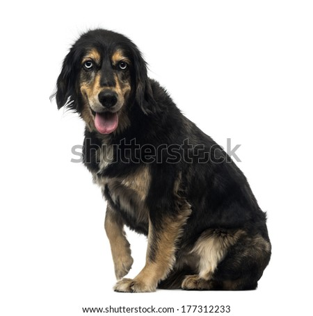 Side view of a Crossbreed dog panting, looking at the camera, isolated on white