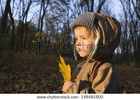 Side view of a young boy holding maple leaf in park - stock photo
