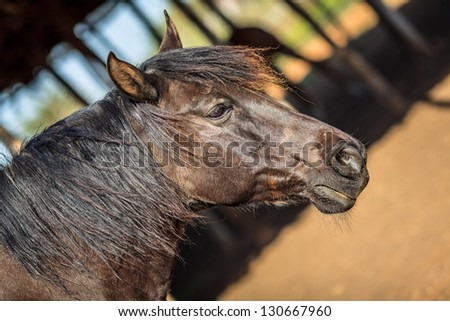 Side-view of brown male horse - stock photo