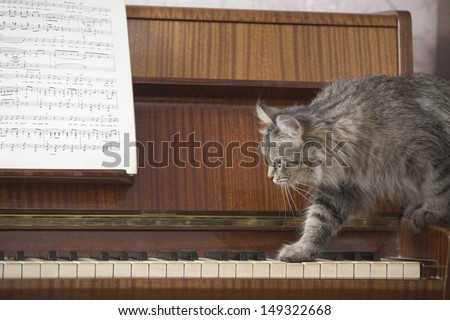 Side view of cat walking on piano keys with music sheet - stock photo