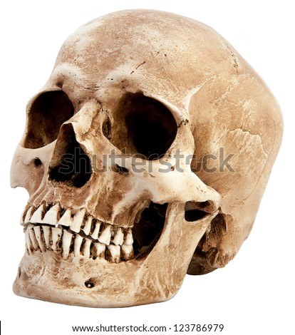 Side View Human Skull Stock Photo Royalty Free 123786979