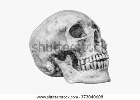 Side view of human skull on isolated with  - stock photo