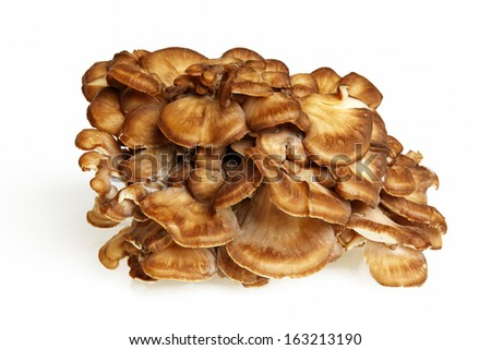 Side View Of Maitake Mushroom Over White Background - stock photo