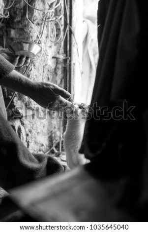 Side view of male hand feeding cat from hand in monochrome image.