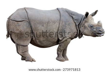 Side view of one-horned  Rhinoceros isolated on a white background