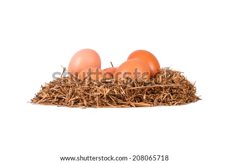 Side view of organic and natural eggs in nest, isolated on white background.