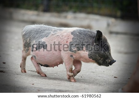 Pot Belly Stock Images Royalty Free Images Amp Vectors