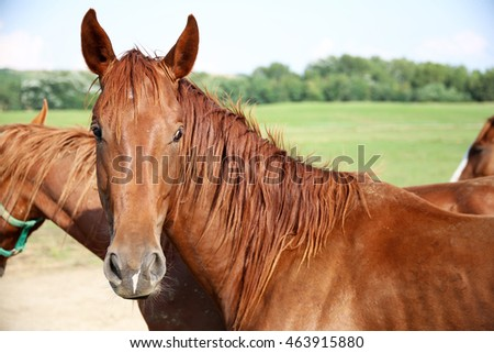 Side view portrait of a young chestnut horse against green pasture