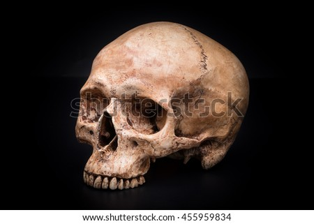 Sideview of human skull on isolated black background - stock photo