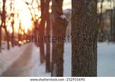 sidewalk in town morning photo - stock photo