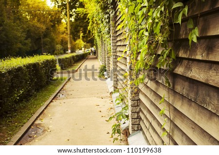 Sidewalk with ivy green lianas over the fence - stock photo