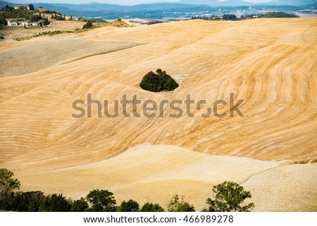 SIENA, TUSCANY - AUGUST 09, 2016 -  landscape Tuscany hills of Val d'Orcia earth yellow desert