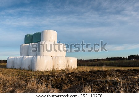 Silage bales on a field