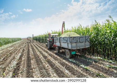 Silage corn maize harvest - stock photo