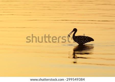 Silhouette - stock photo