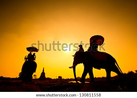 silhouette action of elephant in countryside Ayutthaya province, thailand