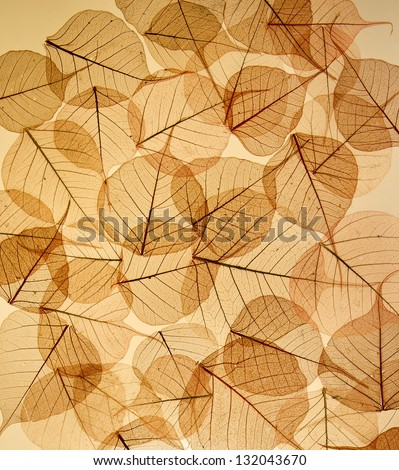 silhouette backdrop of colorful floral leaves transparent textured - stock photo